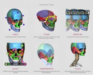 Људска анатомија - кликни!